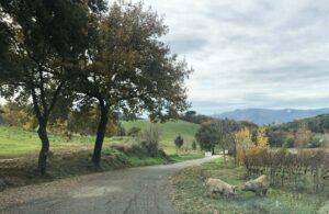 Magliali selvatici a Montelabate